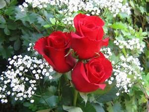 Sonu Sanam: Beautiful Red Roses