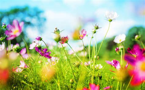 Spring Background - WallpaperSafari