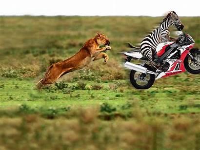 Funny Computer Wallpapers Fun Animal Animals Hilarious