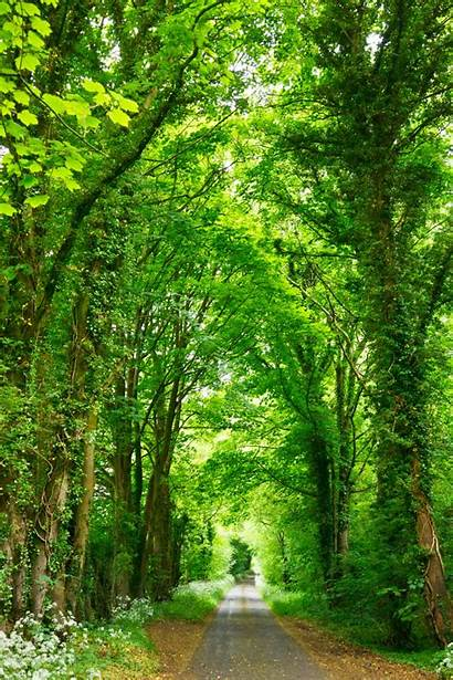 Unsplash Tree Nature