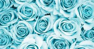 Blue rose | via Tumblr | We Heart It | Ideias | Pinterest