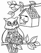 Coloring Bird Pages Owl Birdhouse Printable Sheet Adult Printables Printing Button Through Tocolor Grab Feel Could Well Right sketch template