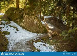 A, Snow, On, The, Path, In, A, Dark, Forest, Gentle, Sunlight, Between, The, Trees, Stock, Photo
