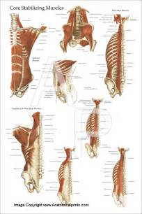 List Of Core Muscles
