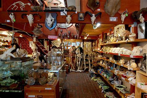the shop of curiosities artistic ceramics in san gimignano berkeley curiosity shop the bone room is closing its doors broke ass stuart s goddamn website