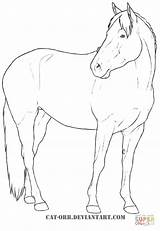 Coloring Mare Warmblood Horses Horse Pages Heavy Breeds Printable Drawing Lineart Fun Supercoloring Orb Paarden Silhouettes Cat sketch template