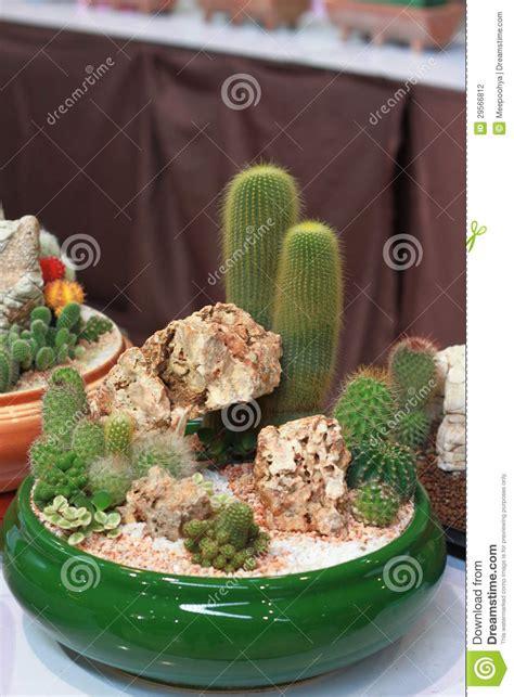 un cactus miniatura fotograf 237 a de archivo imagen 29566812