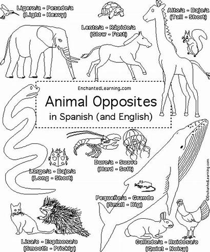 Spanish Coloring Pages Opposites Animal Learning Kindergarten