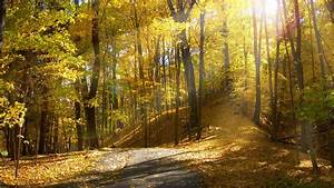Sunlight Autumn Trees sunrise leaves leaf road roads path ...