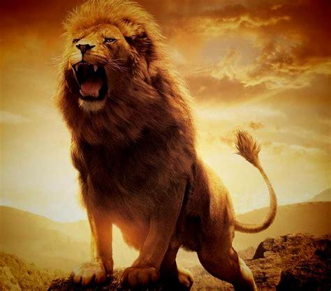 Gambar Singa Keren Keren Kumpulan Gambar