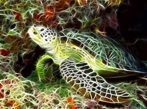 sea turtle screensaver torrent 1337x