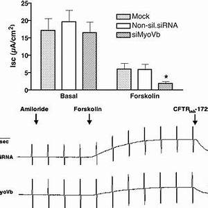 (PDF) Myosin Vb Is Required for Trafficking of the Cystic ...