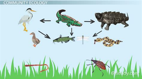 Ecosystem Definition Biology What Is Ecology Definition Explanation Video
