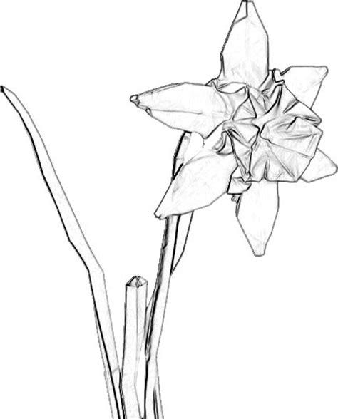 Kleurplaat Narcis by Kleurplaat Narcis