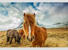 Islandia – wakacje 2018 i 2019 wczasy, wycieczki, all