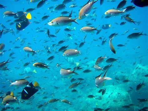 fish  water wallpaper  wallpapersafari