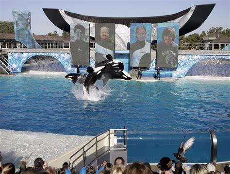 Seaworld Ya No Realizará Espectáculos Con Orcas En