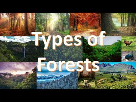 Types of Forests Explained with examples of trees