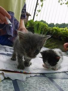 gattini abbandonati dalla mamma!!!! Gatto