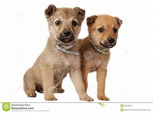 Two Cute Mixed Breed Puppies On White Stock Image - Image ...