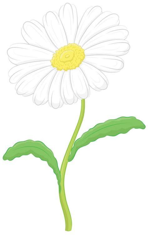 draw  daisy step  step daisy drawing