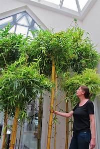 Online Pflanzen Kaufen : atrium lichthof pflanzen begr nung innen au en online kaufen baum ~ Watch28wear.com Haus und Dekorationen