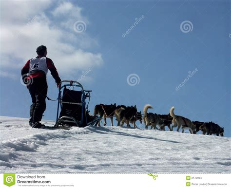 Musher In Aktion Stock Images - Image: 2172904