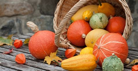 fall vegetables storage tips for fall vegetables my garden life