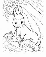 Coloring Rabbit Printable Bunny Pages Baby Colouring Animal Animals Easter Bunnies Rabbits Coloringpagebook Mother Cute Sheets Babies Sheet Drawing Mommy sketch template