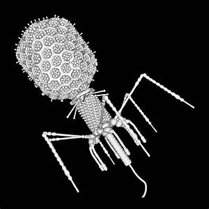 Bacteriophage T4 Photograph By Russell Kightley