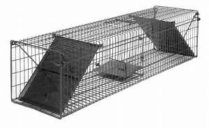 Lebendfalle Selber Bauen : rattenfalle lebend fang einseitig 9 x 10 x 27 cm ~ A.2002-acura-tl-radio.info Haus und Dekorationen