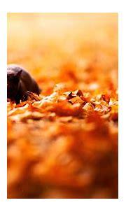 Cat In Nature Orange Wallpapers Background #3009 Wallpaper ...