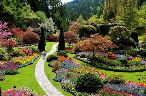 Misty Spring Day At Butchart Gardens, Victoria, B.c.