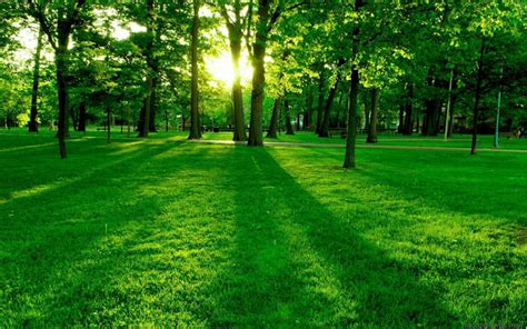 Free Nature Backgrounds by Wallpaper Background Free Downloads Free