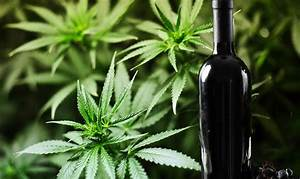 Stoner Guide  Wine And Weed