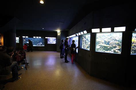 aquarium de la porte doree aquarium tropical de la porte dor 233 e notrebellefrance