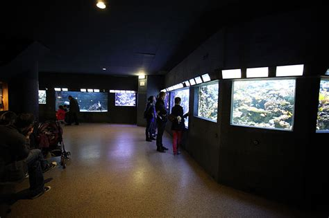 aquarium tropical de la porte dor 233 e notrebellefrance