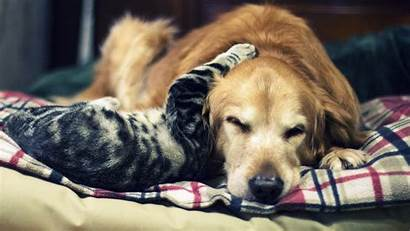 Dog Cat Cats 4k Dogs Puppy Wallpapers