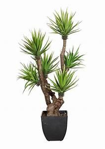 Palmen Kaufen Baumarkt : kunstpflanze agave online kaufen otto ~ Orissabook.com Haus und Dekorationen