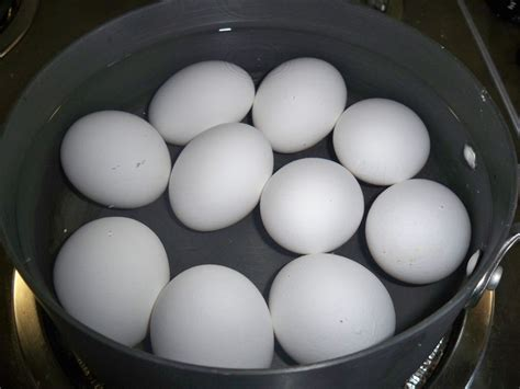 boiling an egg boiled egg in water www pixshark com images galleries with a bite