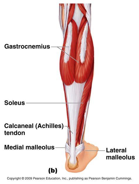 Heupflexor scheur - fysiotherapie 4 all