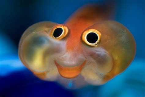 happy fish hotelroomsearchnet