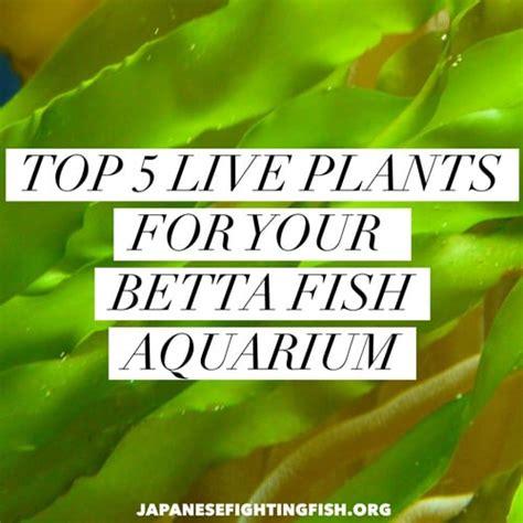 top  favorite plants     plants