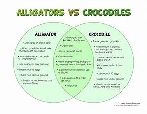 The Difference Between Alligators And Crocodiles
