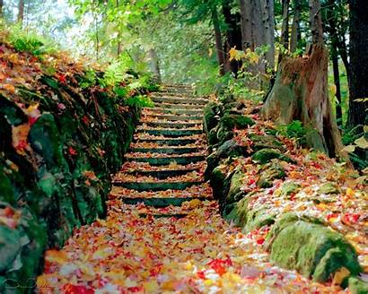 Autumn Season Leaves Fall Wallpapers Backgrounds Cooper