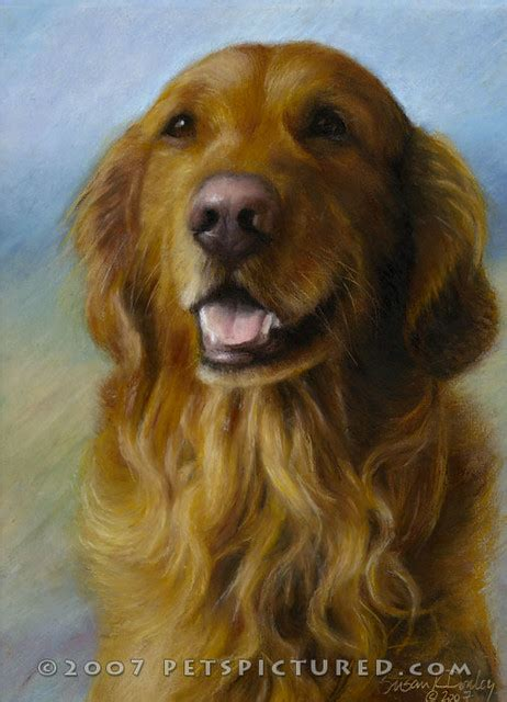 Memorial Portrait Of Samson Golden Retriever Susan