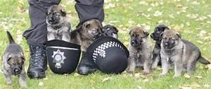 German Shepherd Police Puppy 18 Hd Wallpaper ...
