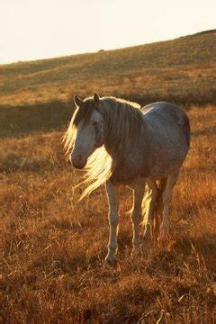breeds  horses   indians  animals momme