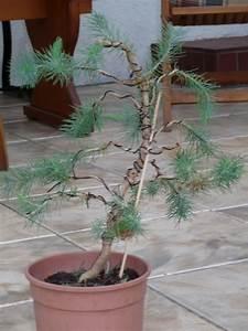 Bonsai Pflege Für Anfänger : bonsai alle arten und sorten beliebte pflanzen erfahrungen green24 hilfe pflege bilder ~ Frokenaadalensverden.com Haus und Dekorationen