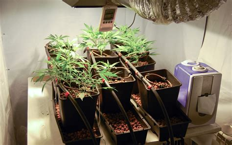 Odor Control Tips For Your Indoor Cannabis Grow Room Leafly